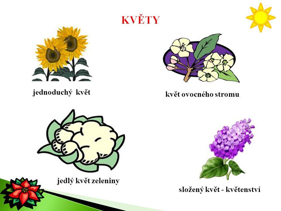 jednoduchý květ květ ovocného stromu jedlý květ zeleniny složený květ - květenství