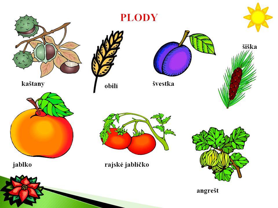 kaštany obilí švestka šiška jablkorajské jablíčko angrešt