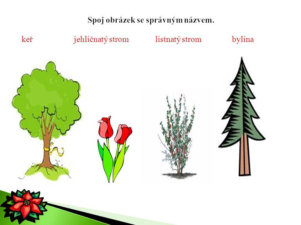 keř jehličnatý strom listnatý strom bylina