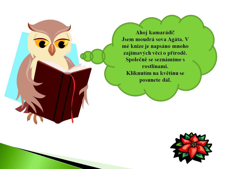 Ahoj kamarádi! Jsem moudrá sova Agáta. V mé knize je napsáno mnoho zajímavých věcí o přírodě. Společně se seznámíme s rostlinami. Kliknutím na květinu