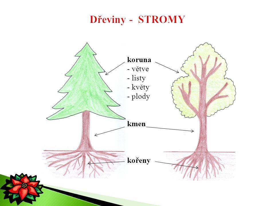 koruna - větve - listy - květy - plody kmen kořeny
