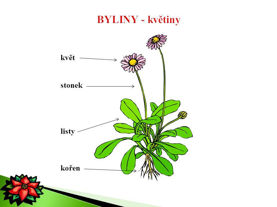 květ stonek listy kořen