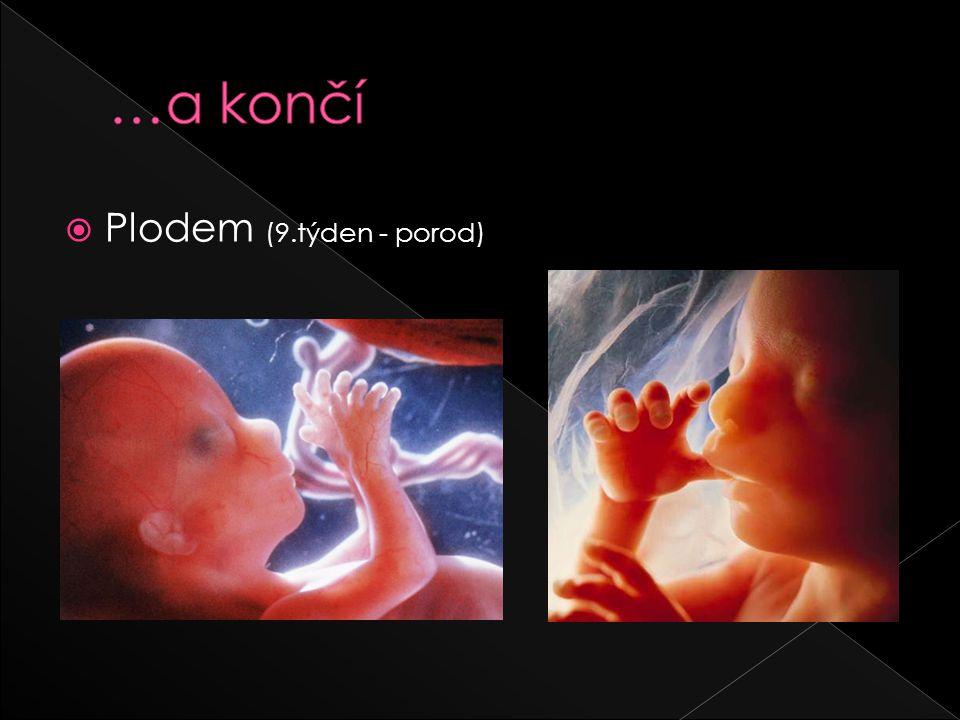  Plodem (9.týden - porod)