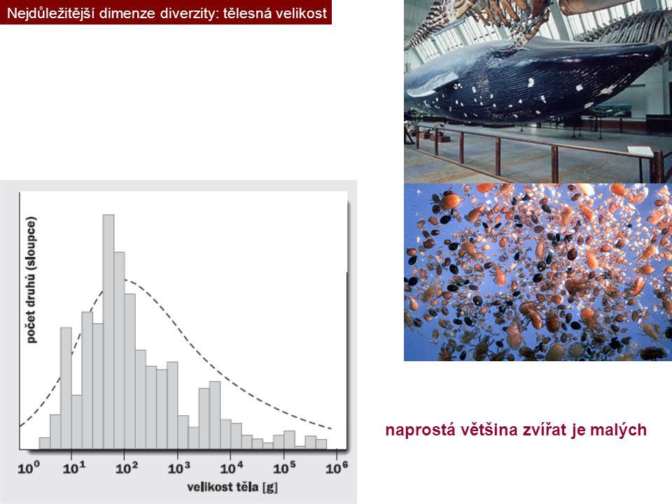 Nejdůležitější dimenze diverzity: tělesná velikost naprostá většina zvířat je malých
