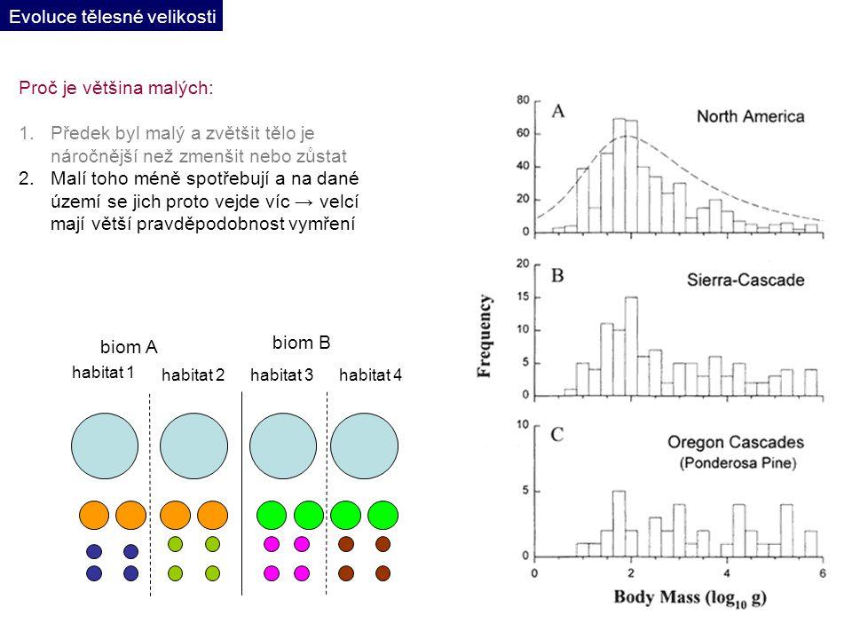 biom A biom B habitat 1 habitat 2habitat 3habitat 4 Proč je většina malých: 1.Předek byl malý a zvětšit tělo je náročnější než zmenšit nebo zůstat 2.Malí toho méně spotřebují a na dané území se jich proto vejde víc → velcí mají větší pravděpodobnost vymření Evoluce tělesné velikosti