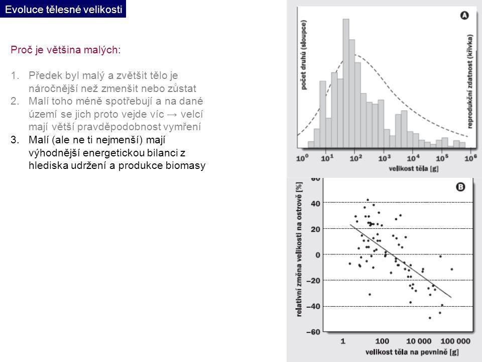 Proč je většina malých: 1.Předek byl malý a zvětšit tělo je náročnější než zmenšit nebo zůstat 2.Malí toho méně spotřebují a na dané území se jich proto vejde víc → velcí mají větší pravděpodobnost vymření 3.Malí (ale ne ti nejmenší) mají výhodnější energetickou bilanci z hlediska udržení a produkce biomasy Evoluce tělesné velikosti