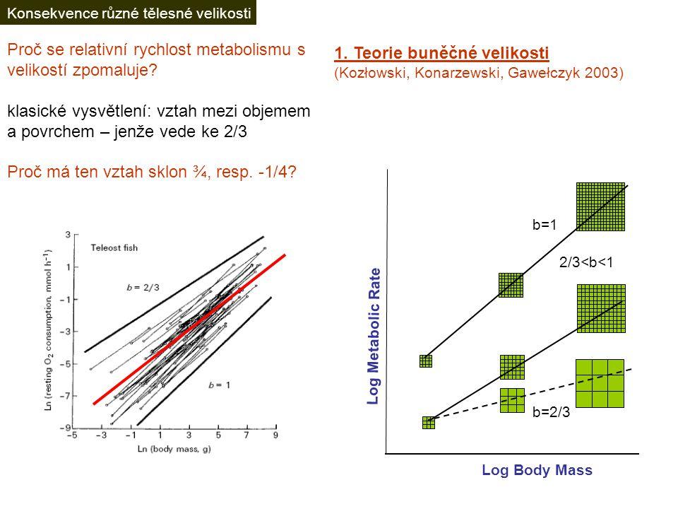 Latitudinální trendy II: velikost těla zjevně více omezené pro suchozemské bezobratlé, u nichž nelze adjustovat metabolismus Ektotermové: Maximální velikosti v tropech