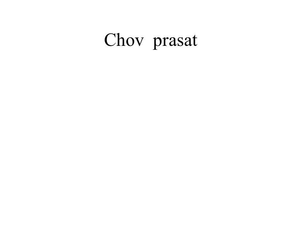 Chov prasat