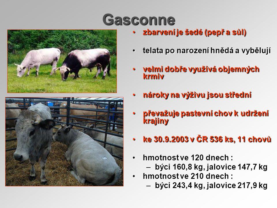 Gasconne zbarvení je šedé (pepř a sůl)zbarvení je šedé (pepř a sůl) telata po narození hnědá a vybělujítelata po narození hnědá a vybělují velmi dobře