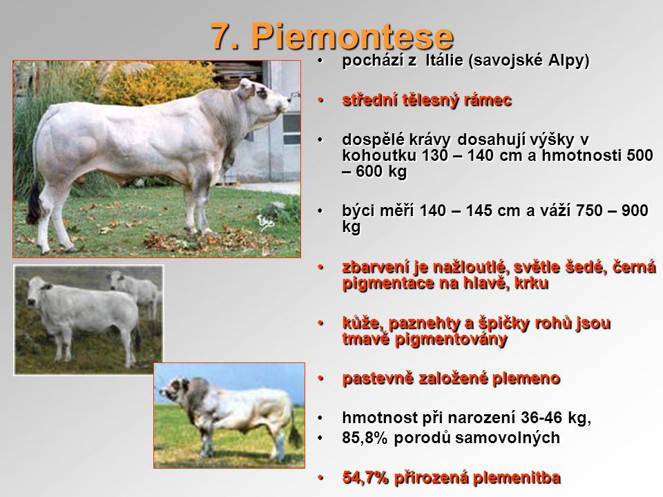 7. Piemontese pochází z Itálie (savojské Alpy)pochází z Itálie (savojské Alpy) střední tělesný rámecstřední tělesný rámec dospělé krávy dosahují výšky