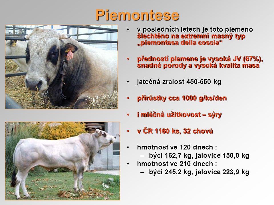 """Piemontese v posledních letech je toto plemeno šlechtěno na extremní masný typ """"piemontesa della coscia""""v posledních letech je toto plemeno šlechtěno"""