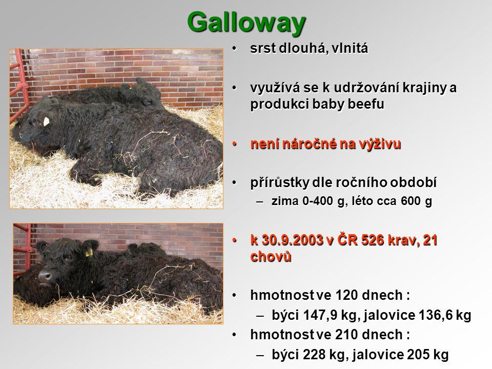 Galloway srst dlouhá, vlnitásrst dlouhá, vlnitá využívá se k udržování krajiny a produkci baby beefuvyužívá se k udržování krajiny a produkci baby bee