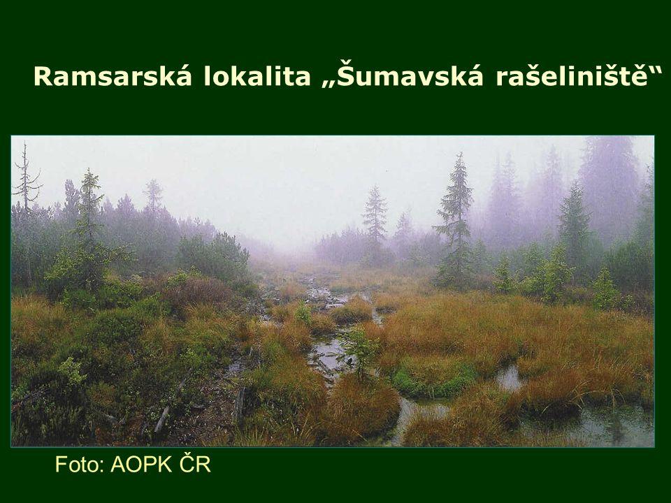 """Ramsarská lokalita """"Šumavská rašeliniště"""" Foto: AOPK ČR"""