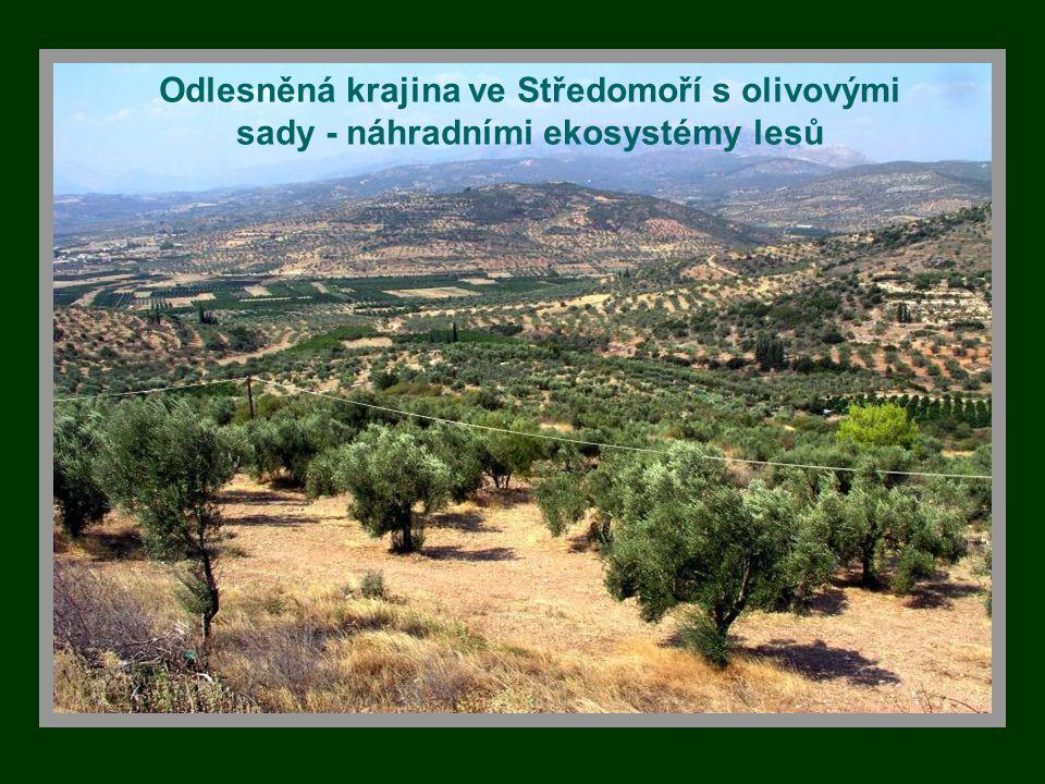 Odlesněná krajina ve Středomoří s olivovými sady - náhradními ekosystémy lesů