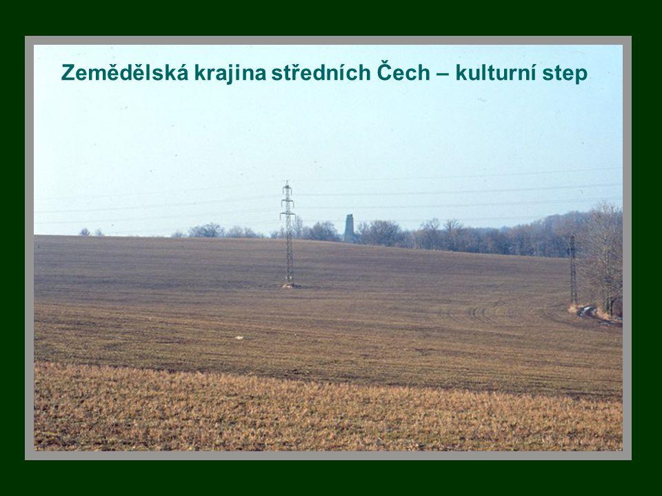Zemědělská krajina středních Čech – kulturní step