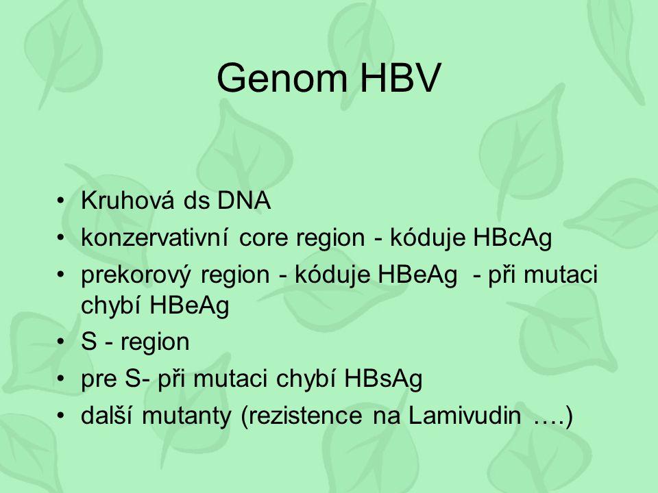 Genom HBV Kruhová ds DNA konzervativní core region - kóduje HBcAg prekorový region - kóduje HBeAg - při mutaci chybí HBeAg S - region pre S- při mutac