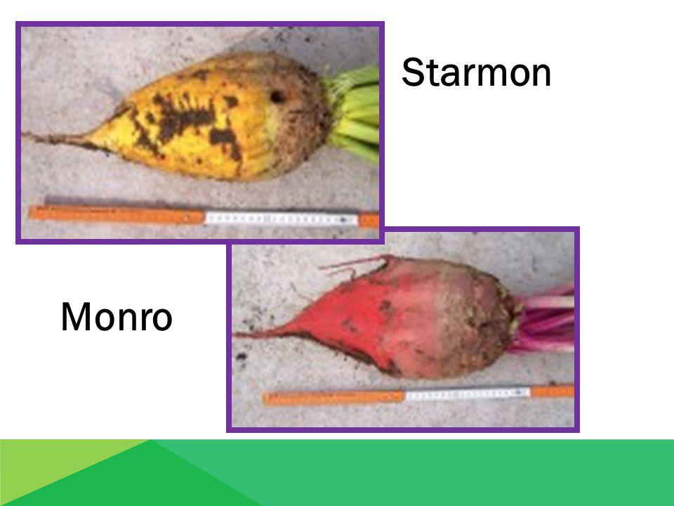 Starmon Monro