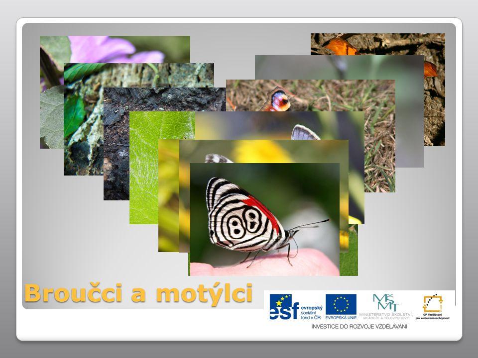 Broučci a motýlci