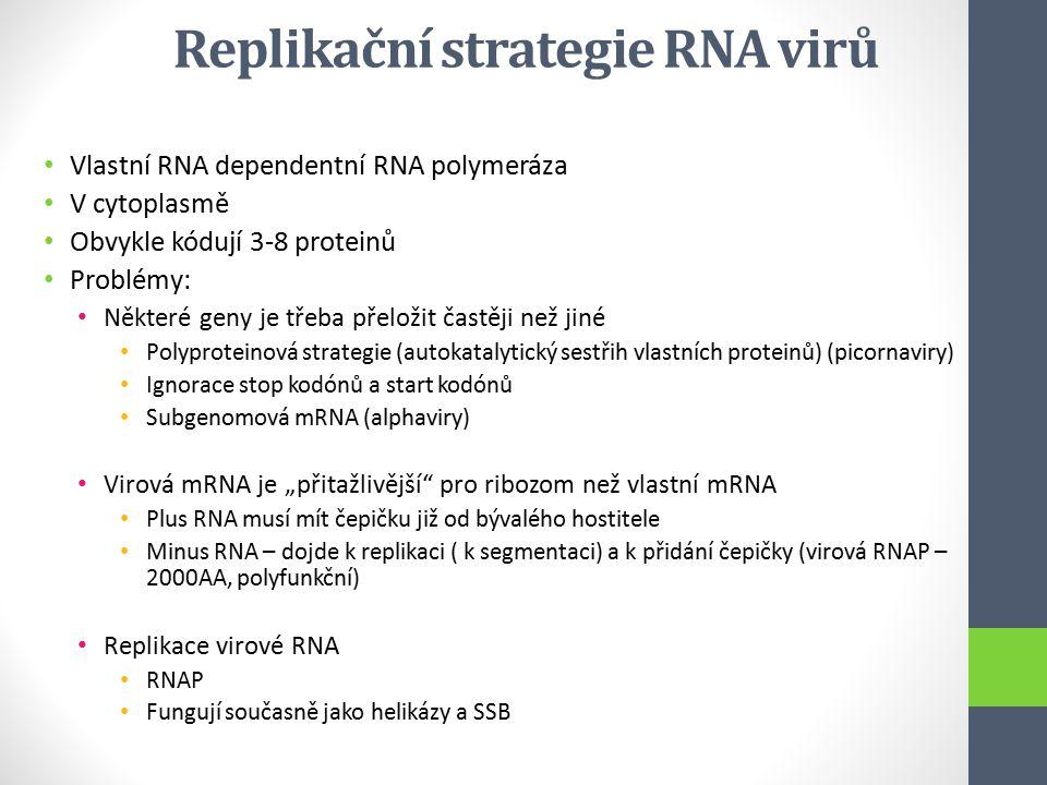 Replikační strategie RNA virů Vlastní RNA dependentní RNA polymeráza V cytoplasmě Obvykle kódují 3-8 proteinů Problémy: Některé geny je třeba přeložit
