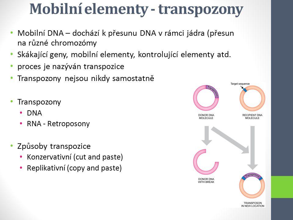 Mobilní elementy - transpozony Mobilní DNA – dochází k přesunu DNA v rámci jádra (přesun na různé chromozómy Skákající geny, mobilní elementy, kontrol