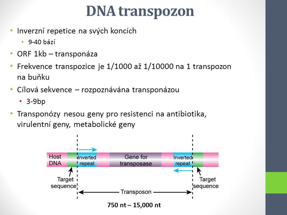 DNA transpozon Inverzní repetice na svých koncích 9-40 bází ORF 1kb – transponáza Frekvence transpozice je 1/1000 až 1/10000 na 1 transpozon na buňku