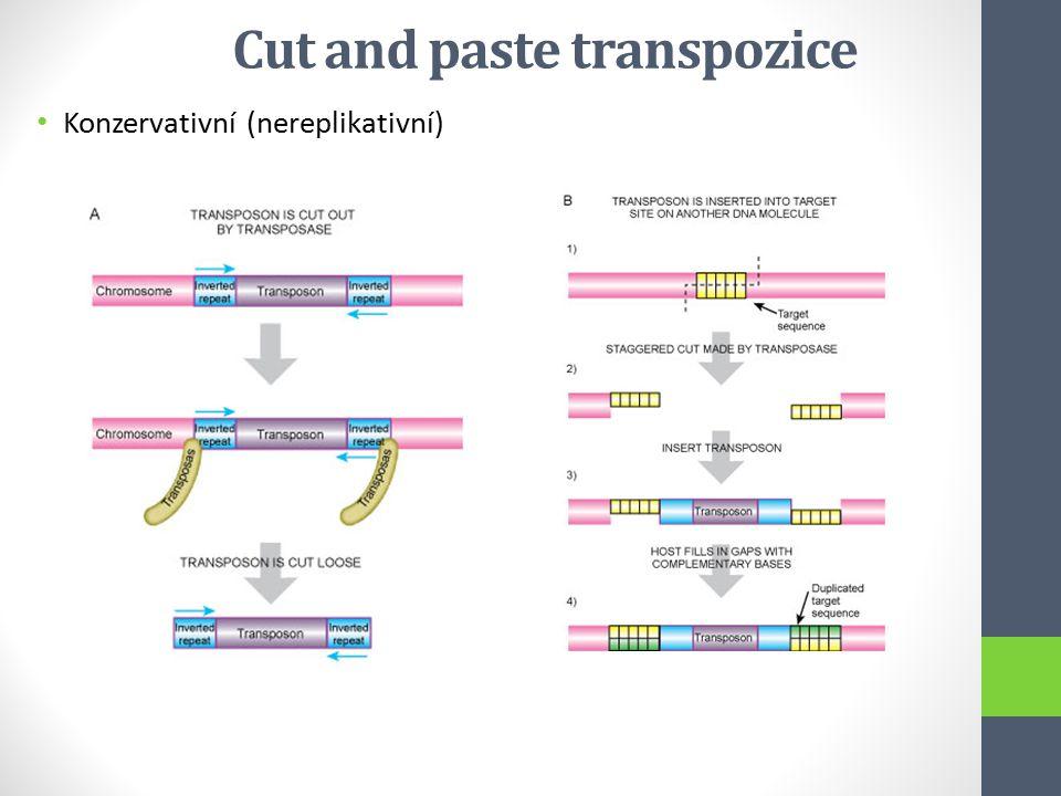Cut and paste transpozice Konzervativní (nereplikativní)