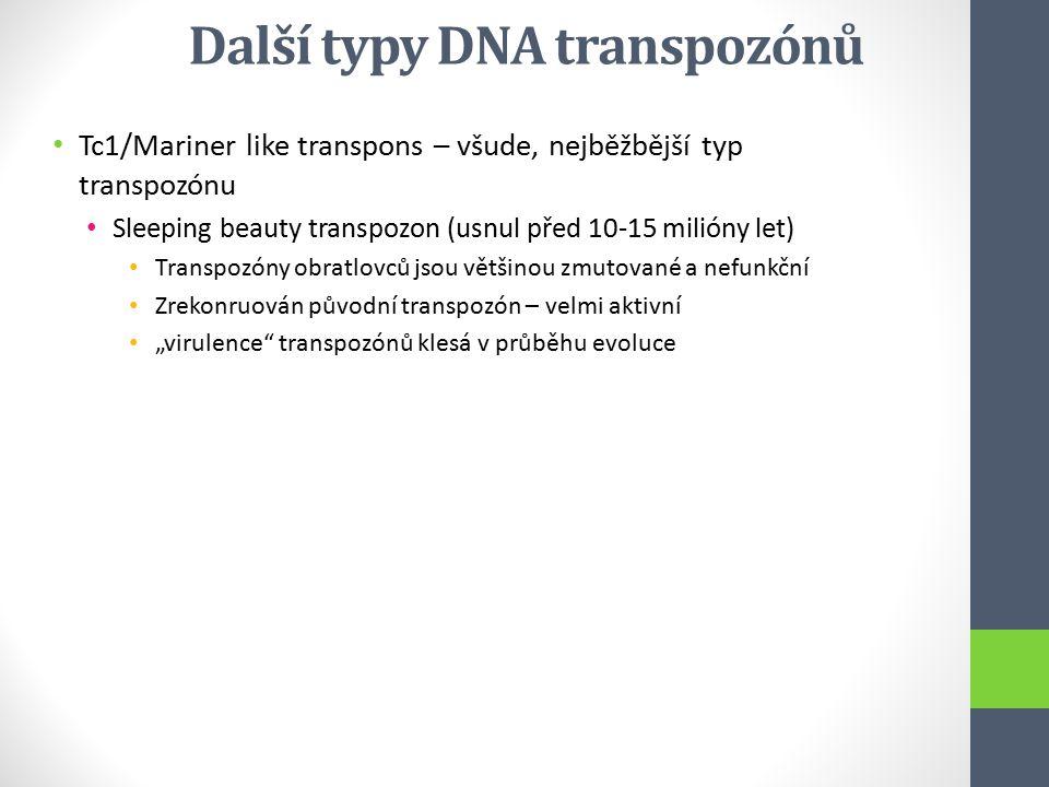 Tc1/Mariner like transpons – všude, nejběžbější typ transpozónu Sleeping beauty transpozon (usnul před 10-15 milióny let) Transpozóny obratlovců jsou