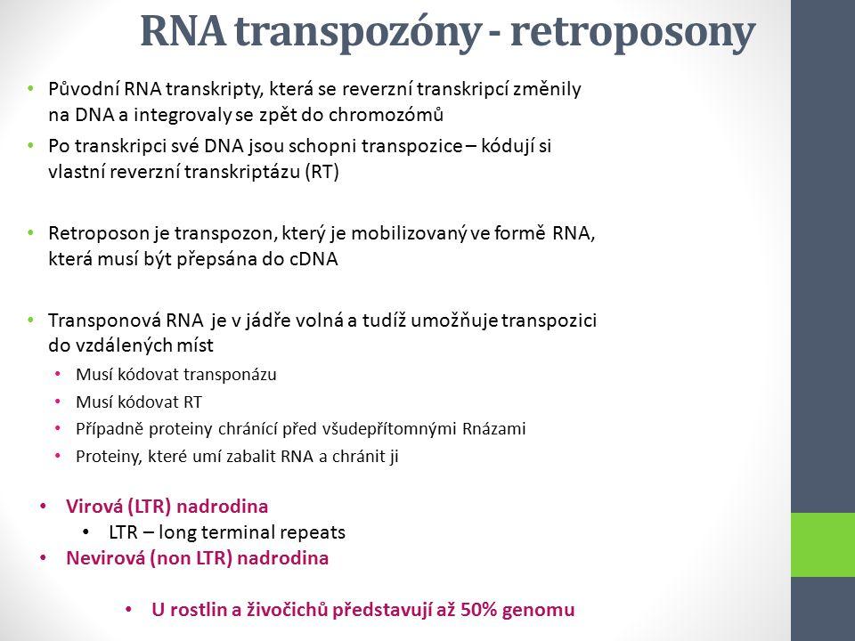 RNA transpozóny - retroposony Původní RNA transkripty, která se reverzní transkripcí změnily na DNA a integrovaly se zpět do chromozómů Po transkripci