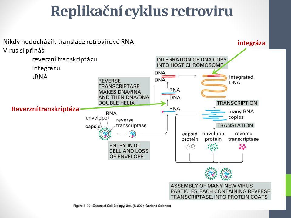 Replikační cyklus retroviru Nikdy nedochází k translace retrovirové RNA Virus si přináší reverzní transkriptázu Integrázu tRNA Reverzní transkriptáza