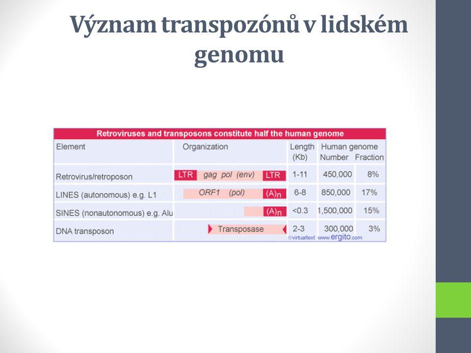 Význam transpozónů v lidském genomu