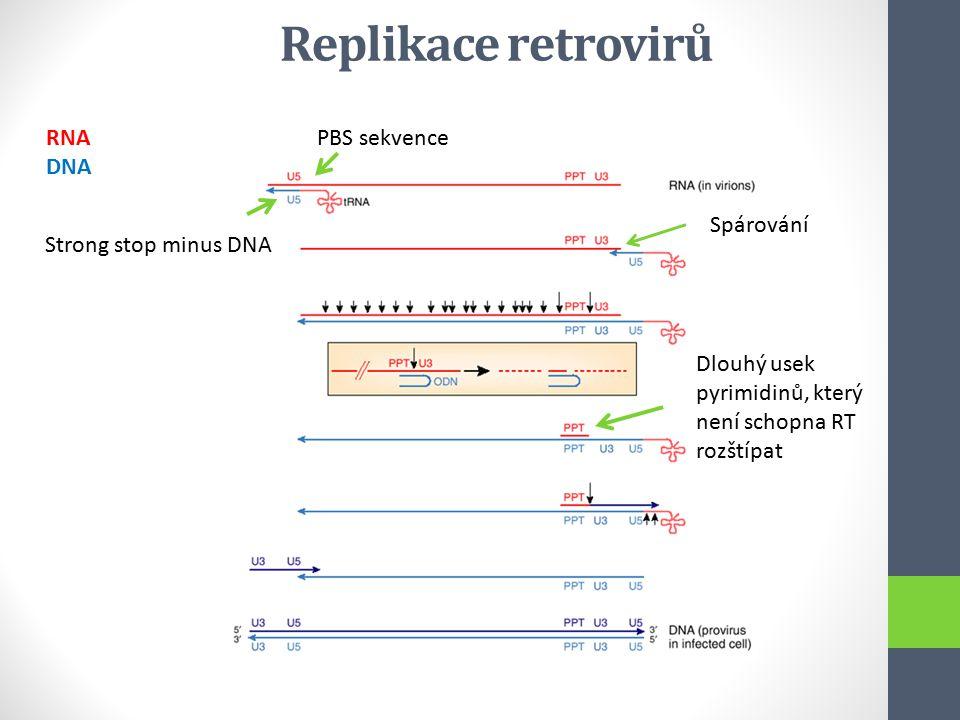 Replikace retrovirů PBS sekvence Strong stop minus DNA RNA DNA Spárování Dlouhý usek pyrimidinů, který není schopna RT rozštípat