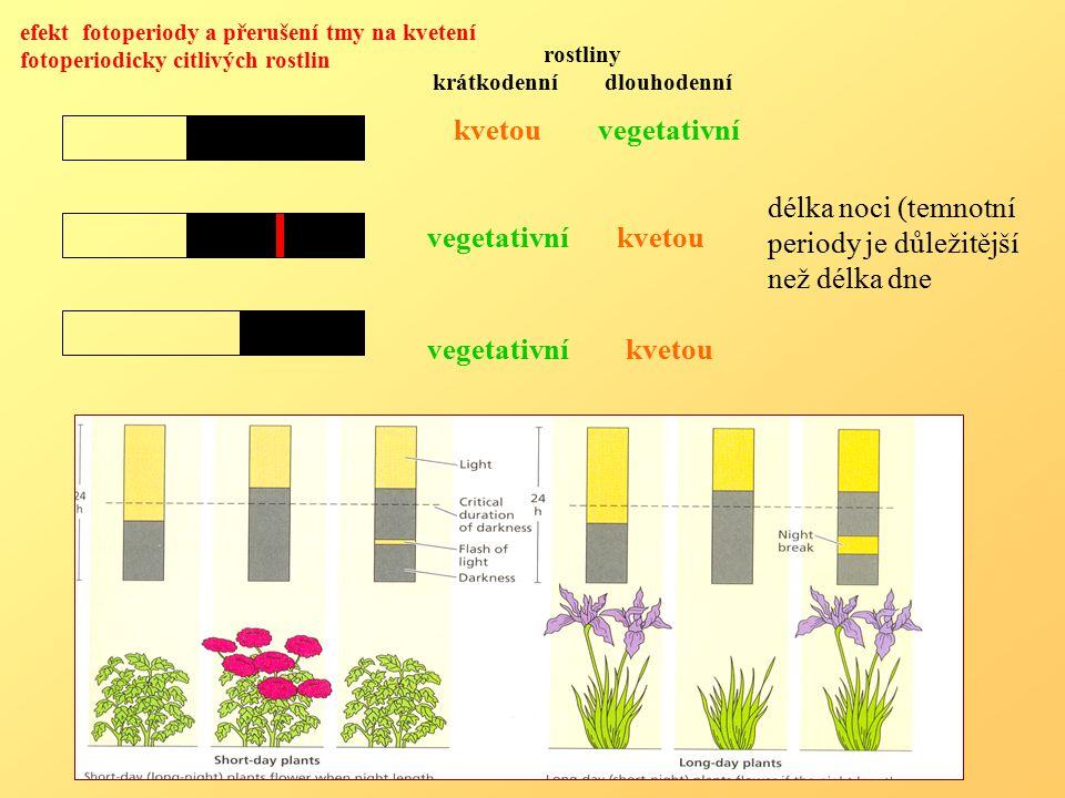 rostliny krátkodenní dlouhodenní kvetou vegetativní vegetativní kvetou efekt fotoperiody a přerušení tmy na kvetení fotoperiodicky citlivých rostlin délka noci (temnotní periody je důležitější než délka dne