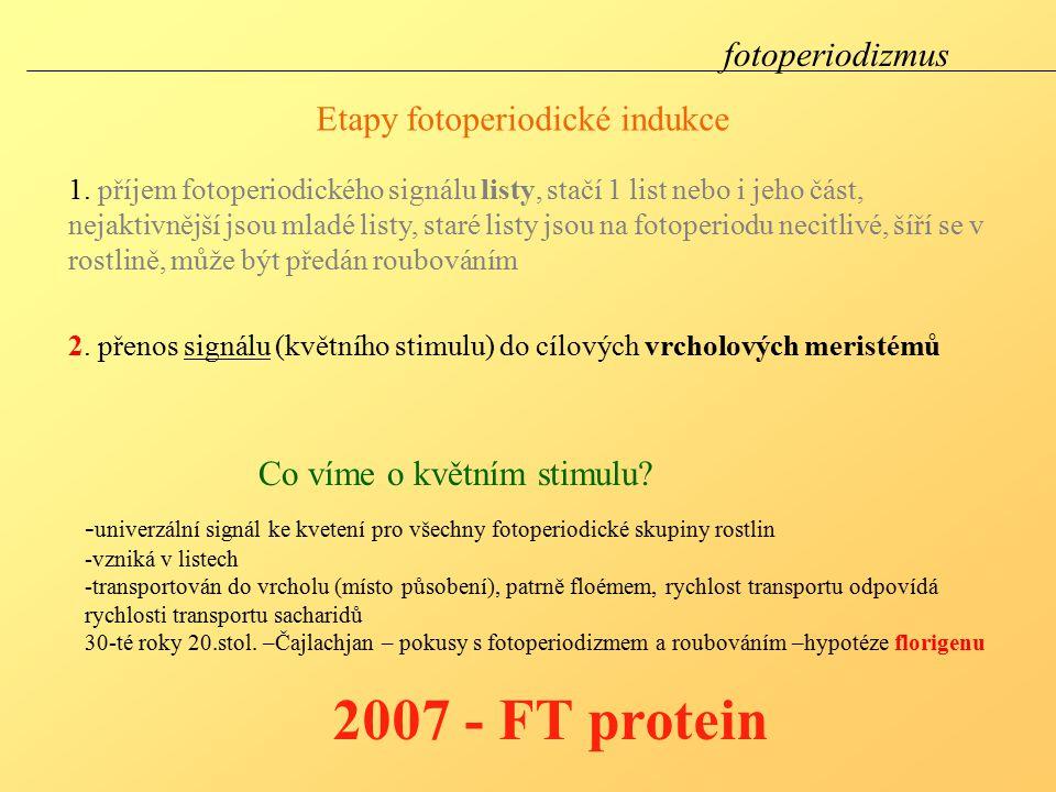 Etapy fotoperiodické indukce 2.