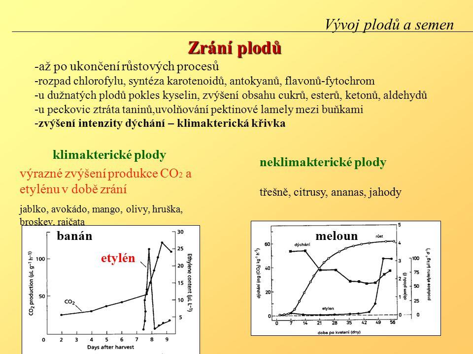Zrání plodů -až po ukončení růstových procesů -rozpad chlorofylu, syntéza karotenoidů, antokyanů, flavonů-fytochrom -u dužnatých plodů pokles kyselin, zvýšení obsahu cukrů, esterů, ketonů, aldehydů -u peckovic ztráta taninů,uvolňování pektinové lamely mezi buňkami -zvýšení intenzity dýchání – klimakterická křivka Vývoj plodů a semen meloun výrazné zvýšení produkce CO 2 a etylénu v době zrání jablko, avokádo, mango, olivy, hruška, broskev, rajčata neklimakterické plody třešně, citrusy, ananas, jahody klimakterické plody etylén banán