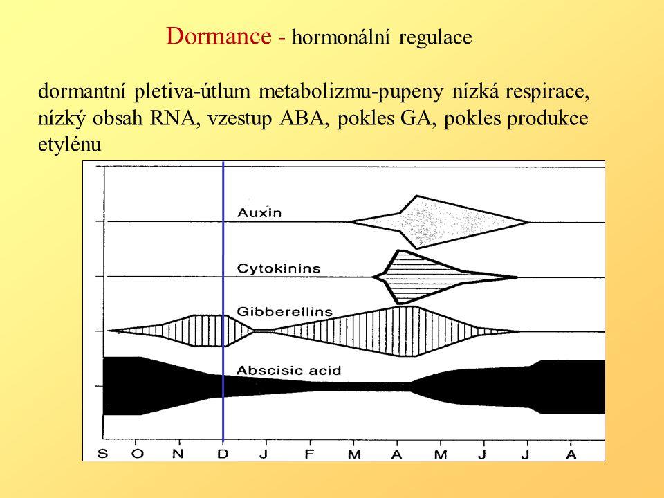 Dormance - hormonální regulace dormantní pletiva-útlum metabolizmu-pupeny nízká respirace, nízký obsah RNA, vzestup ABA, pokles GA, pokles produkce etylénu