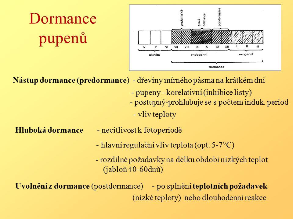 Dormance pupenů Nástup dormance (predormance) - dřeviny mírného pásma na krátkém dni - pupeny –korelativní (inhibice listy) - postupný-prohlubuje se s počtem induk.