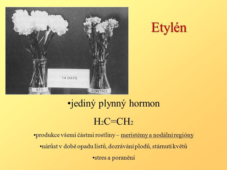 Etylén jediný plynný hormon H 2 C=CH 2 produkce všemi částmi rostliny – meristémy a nodální regióny nárůst v době opadu listů, dozrávání plodů, stárnutí květů stres a poranění