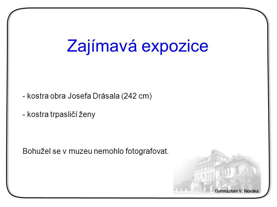 - kostra obra Josefa Drásala (242 cm) - kostra trpasličí ženy Bohužel se v muzeu nemohlo fotografovat.
