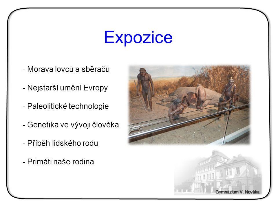 - Morava lovců a sběračů - Nejstarší umění Evropy - Paleolitické technologie - Genetika ve vývoji člověka - Příběh lidského rodu - Primáti naše rodina Expozice