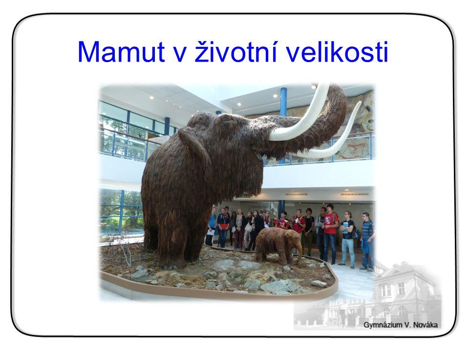 Mamut v životní velikosti