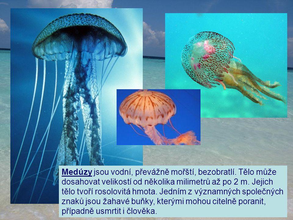Medúzy jsou vodní, převážně mořští, bezobratlí. Tělo může dosahovat velikostí od několika milimetrů až po 2 m. Jejich tělo tvoří rosolovitá hmota. Jed