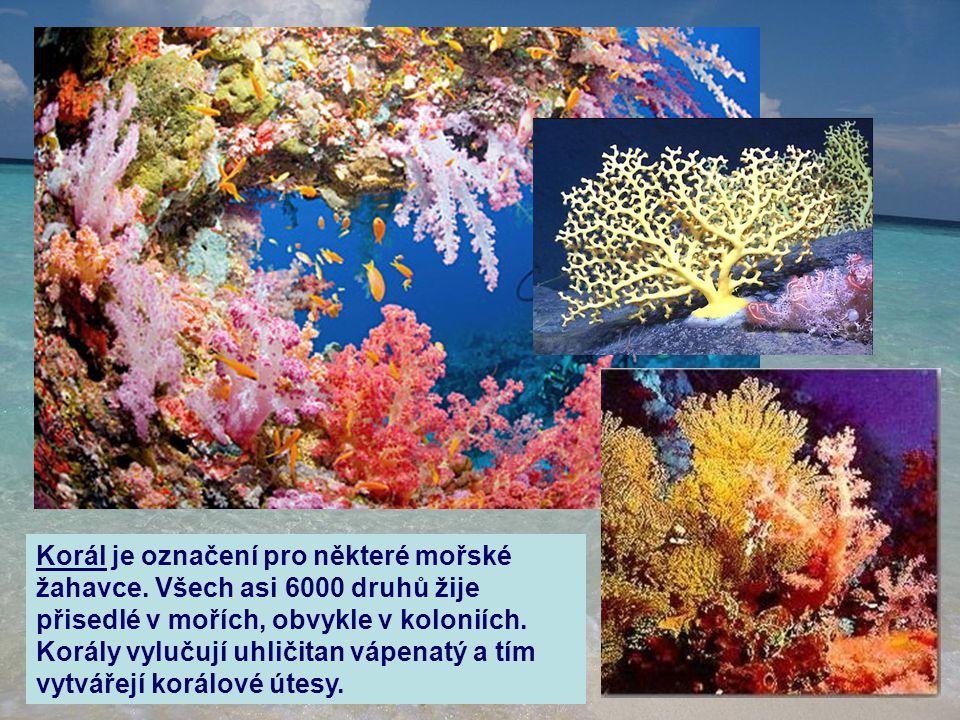 Korál je označení pro některé mořské žahavce. Všech asi 6000 druhů žije přisedlé v mořích, obvykle v koloniích. Korály vylučují uhličitan vápenatý a t