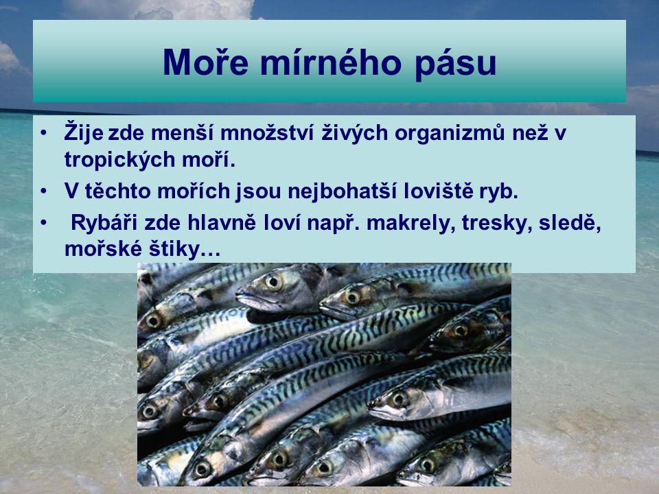 Moře mírného pásu Žije zde menší množství živých organizmů než v tropických moří. V těchto mořích jsou nejbohatší loviště ryb. Rybáři zde hlavně loví