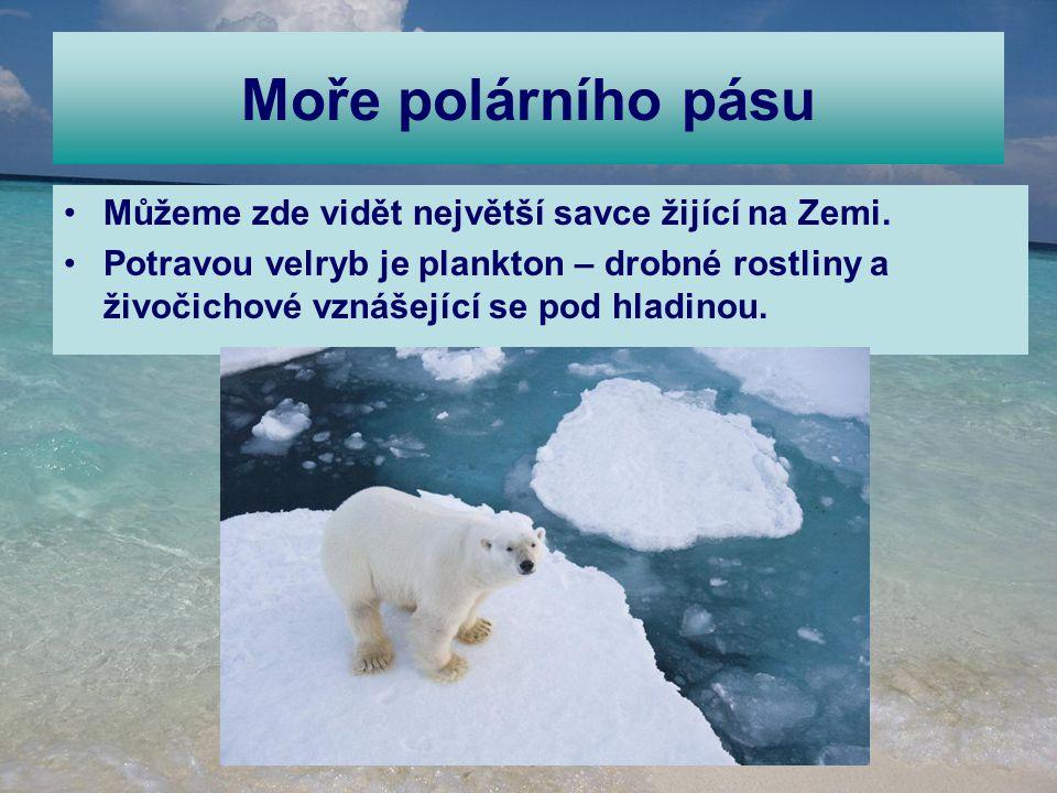 Moře polárního pásu Můžeme zde vidět největší savce žijící na Zemi. Potravou velryb je plankton – drobné rostliny a živočichové vznášející se pod hlad