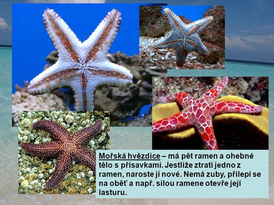 Mořská hvězdice – má pět ramen a ohebné tělo s přísavkami. Jestliže ztratí jedno z ramen, naroste jí nové. Nemá zuby, přilepí se na oběť a např. silou