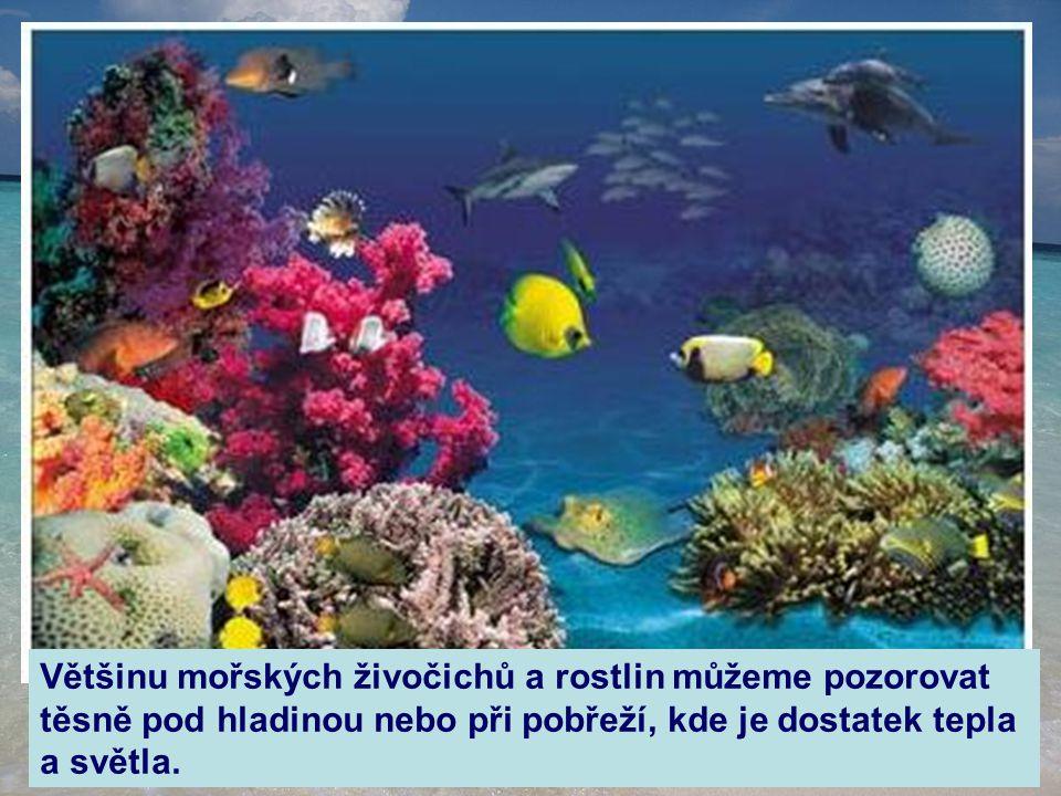 Většinu mořských živočichů a rostlin můžeme pozorovat těsně pod hladinou nebo při pobřeží, kde je dostatek tepla a světla.