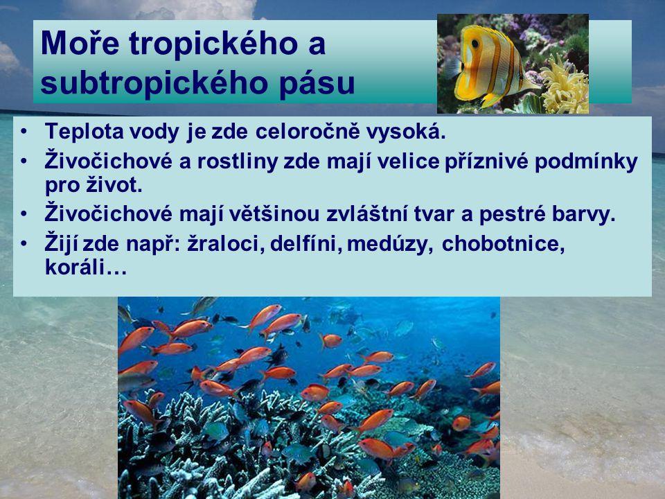 Moře tropického a subtropického pásu Teplota vody je zde celoročně vysoká. Živočichové a rostliny zde mají velice příznivé podmínky pro život. Živočic