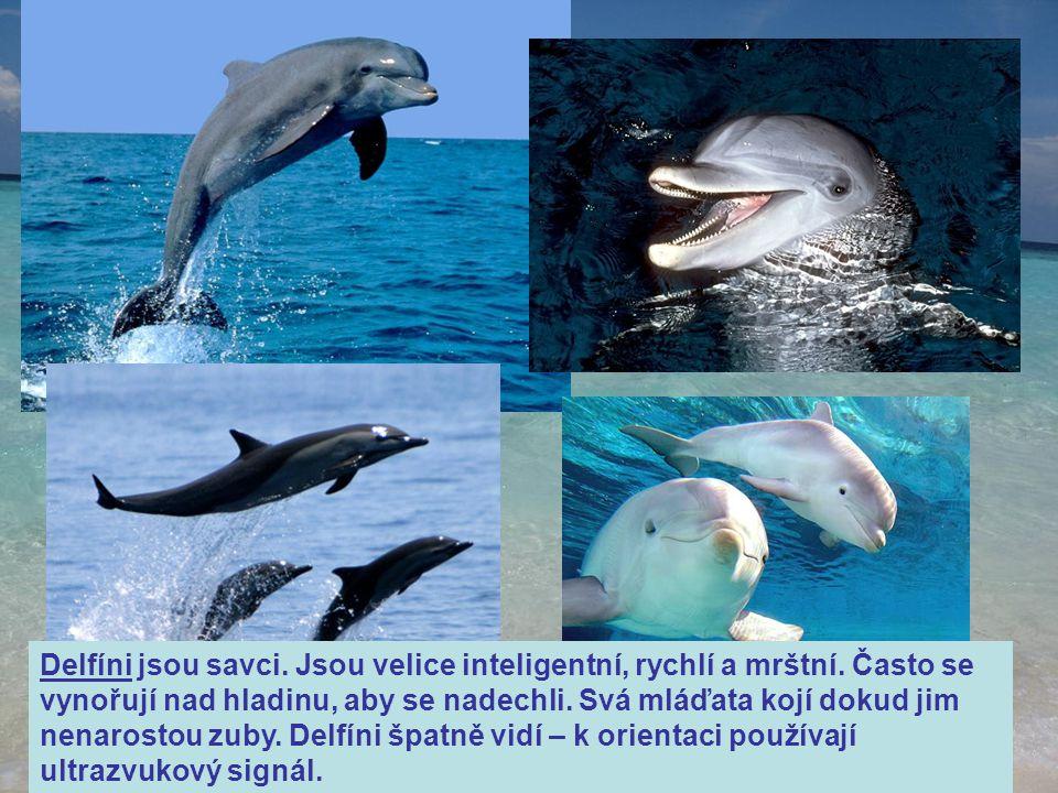 Delfíni jsou savci. Jsou velice inteligentní, rychlí a mrštní. Často se vynořují nad hladinu, aby se nadechli. Svá mláďata kojí dokud jim nenarostou z