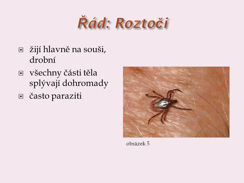  žijí hlavně na souši, drobní  všechny části těla splývají dohromady  často paraziti obrázek 5