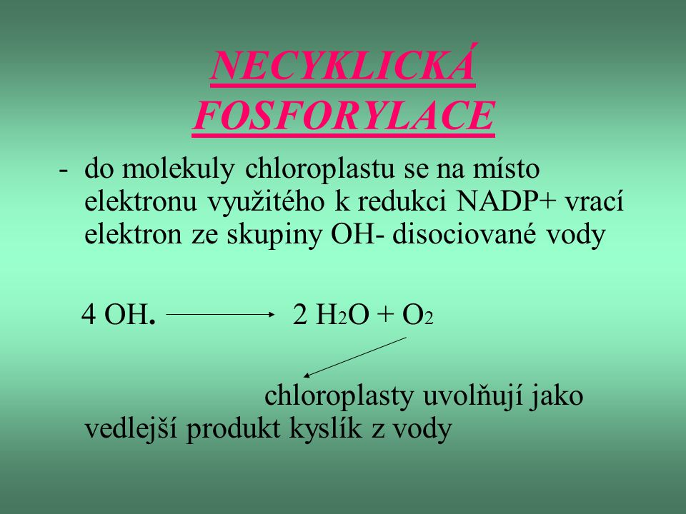 NECYKLICKÁ FOSFORYLACE -do molekuly chloroplastu se na místo elektronu využitého k redukci NADP+ vrací elektron ze skupiny OH- disociované vody 4 OH.